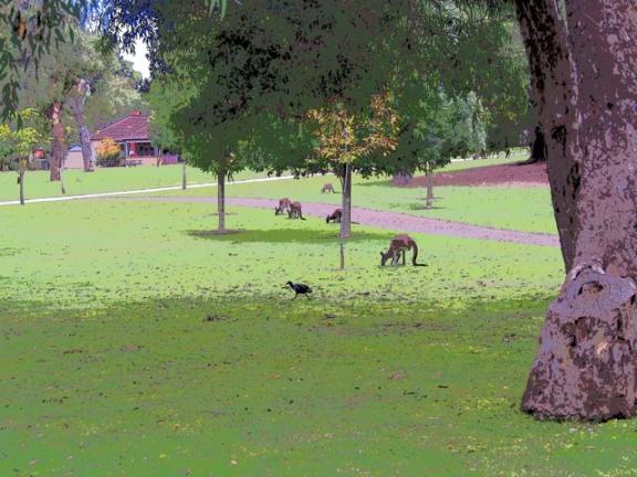 arty kangaroos